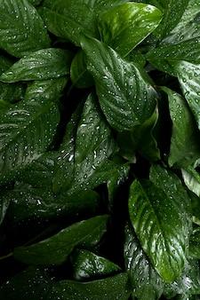 Folha tropical com fundo verde escuro textura