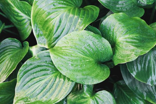 Folha tropical com gotas de água