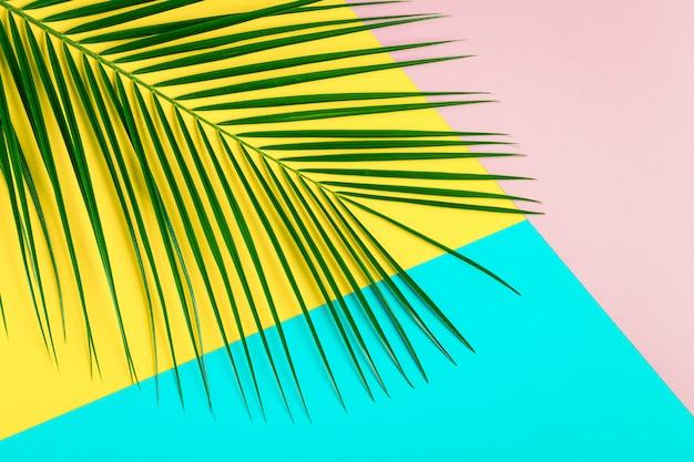 Folha tropical em fundo pastel