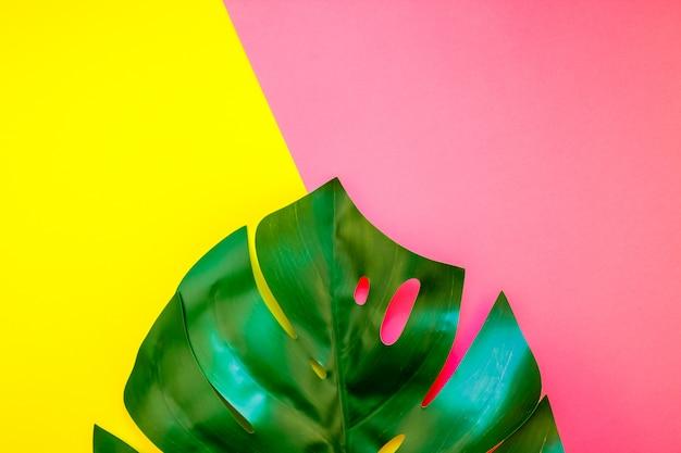 Folha tropical monstera selva em brilhante
