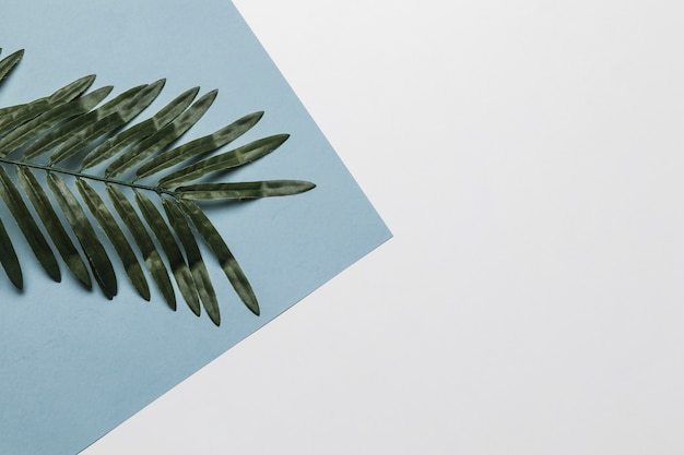 Folha tropical para spa com copyspace