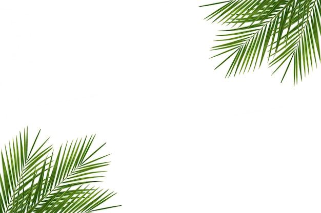 Folha tropical verde no branco
