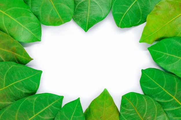 Folha verde bonita para o fundo ou a textura - conceito da natureza.