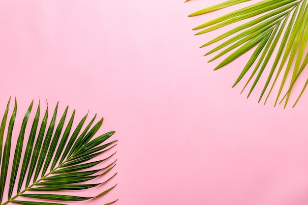 Folha verde com espaço de cópia no fundo rosa