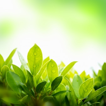 Folha verde com fundo natural borrado no jardim.