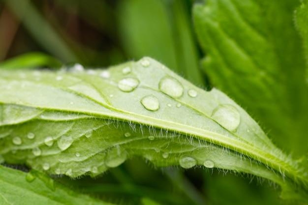 Folha verde com gota d'água