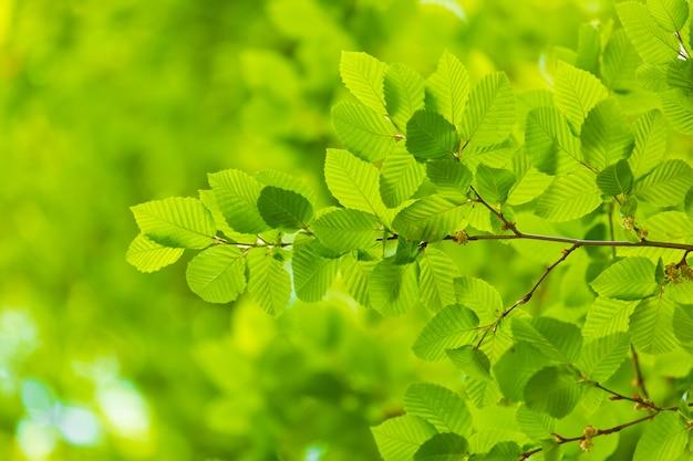 Folha verde com gota de água no fundo preto