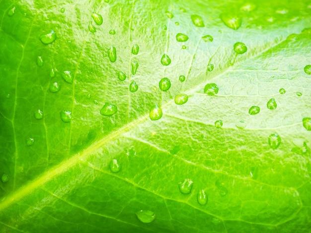 Folha verde com gotas de água, close-up.