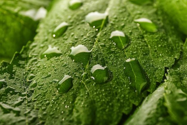 Folha verde com gotas de água, closeup