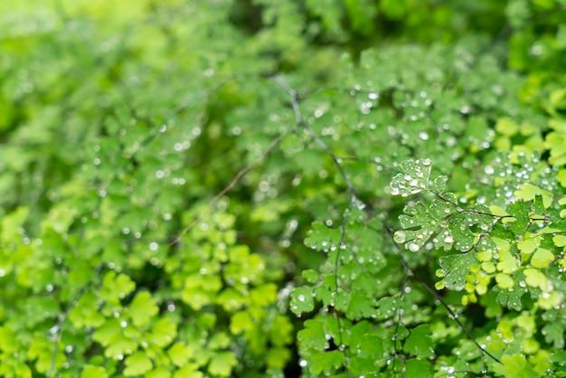 Folha verde com gotas de água ou gotículas de água