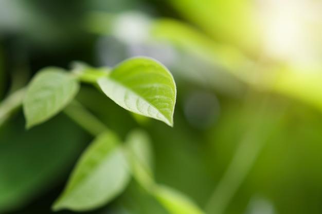 Folha verde, com, manhã, luz, fundo, em, natureza