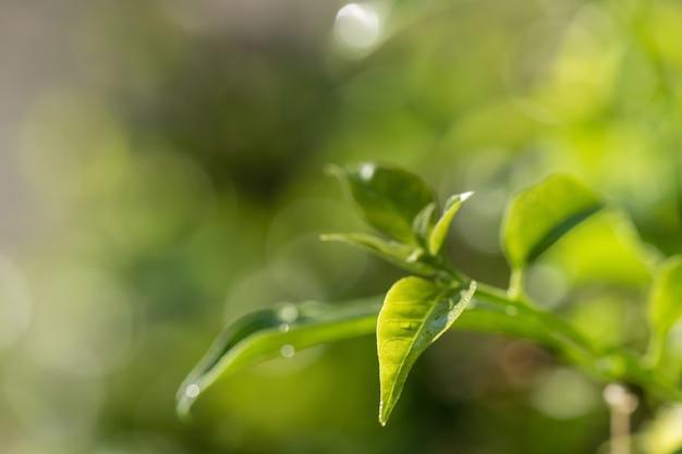 Folha verde com pingo de chuva e bokeh de fundo