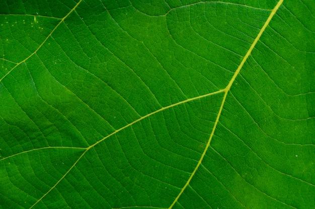 Folha verde como pano de fundo