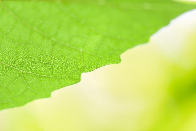 Folha verde da natureza abstrata na árvore bonita com foco macio da luz solar e borrão verde / feche acima das folhas no jardim do verão