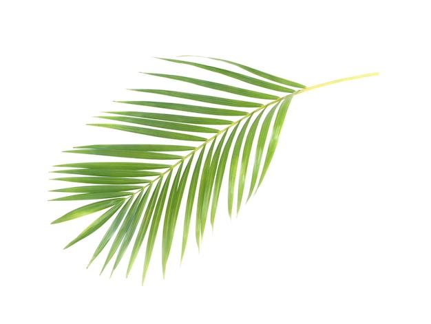 Folha verde de palmeira em fundo branco com traçado de recorte