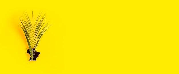 Folha verde de palmeira em um buraco de superfície amarela de papelão rasgado. vista superior, configuração plana. bandeira.