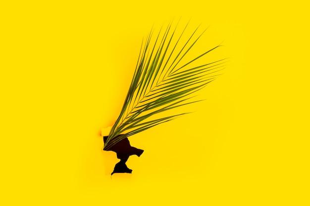 Folha verde de palmeira em um buraco de superfície amarela de papelão rasgado. vista superior, configuração plana.