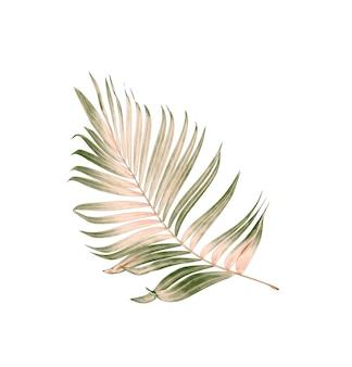 Folha verde de palmeira isolada no fundo branco