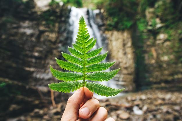 Folha verde de samambaias na mão contra um fundo de pedras e uma cachoeira.