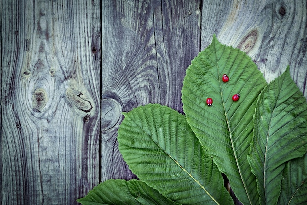 Folha verde de uma castanheira em uma superfície de madeira cinza