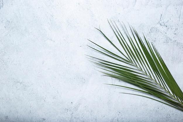 Folha verde de uma palmeira em um fundo de concreto. vista superior, configuração plana.