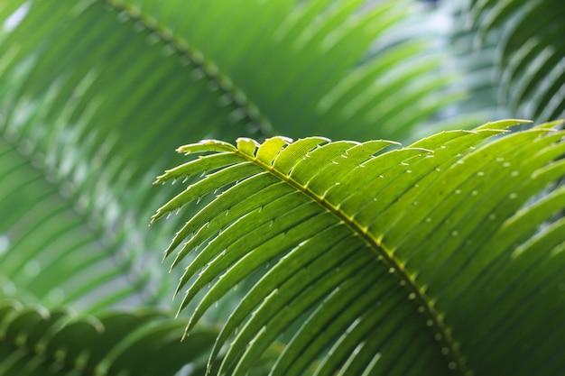 Folha verde de uma planta tropical