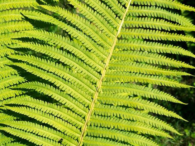 Folha verde detalhada de samambaia da floresta