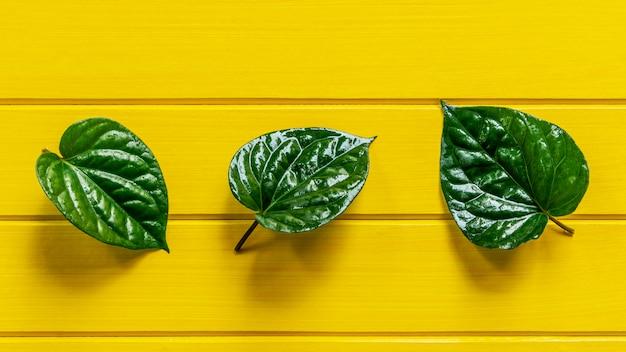 Folha verde do betle do gaiteiro na madeira amarela.