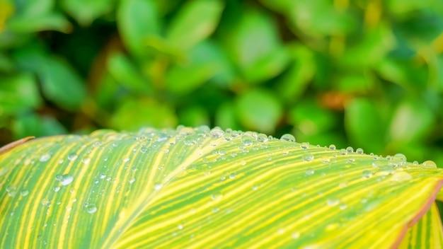 Folha verde e amarela com gotas de água