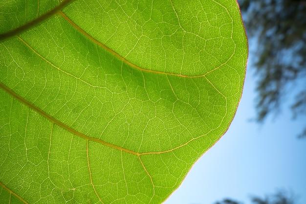 Folha verde e céu