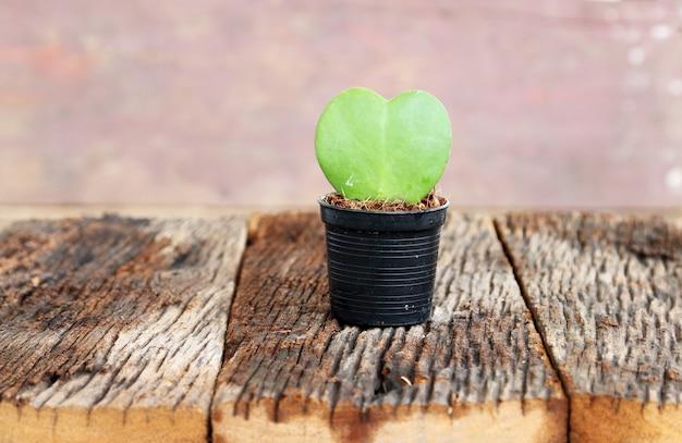 Folha verde e forma de coração vermelho no vaso de flores