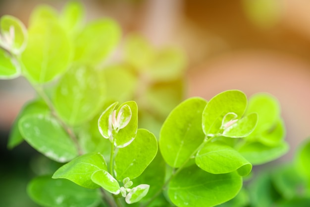 Folha verde e luz solar do close up no jardim no fundo borrado.