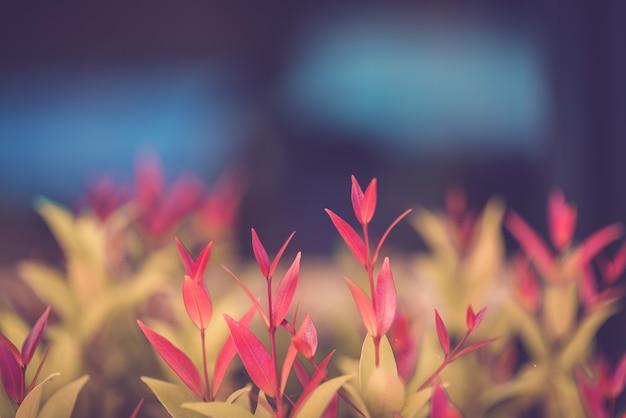 Folha verde e vermelha no fundo de vegetação turva