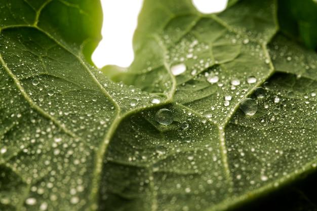 Folha verde em close com gotas de água