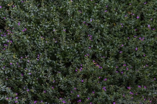 Folha verde em fundo de textura verde escuro