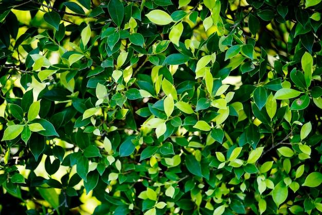 Folha verde, em, natureza