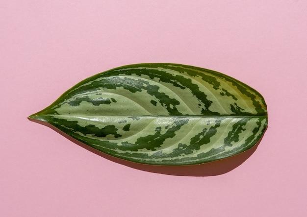 Folha verde em um fundo rosa. a folha da planta é natural. minimalismo.
