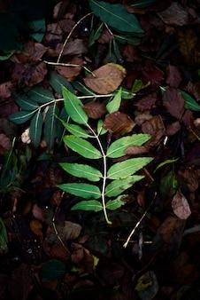 Folha verde em uma floresta de outono na áustria
