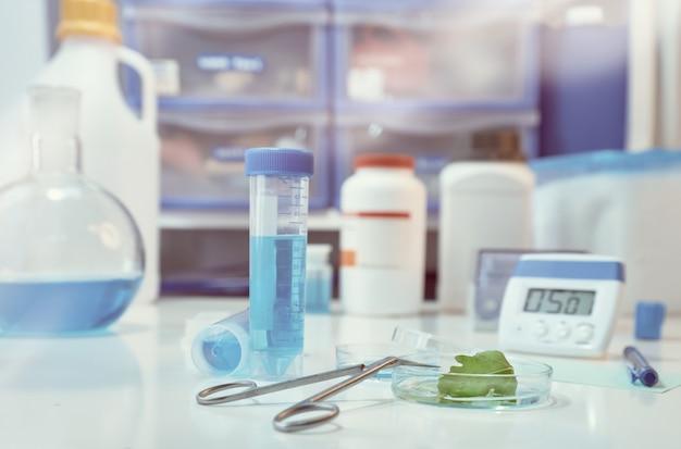 Folha verde em uma placa de petri, com o laboratório fora de foco