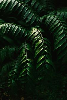 Folha verde escura