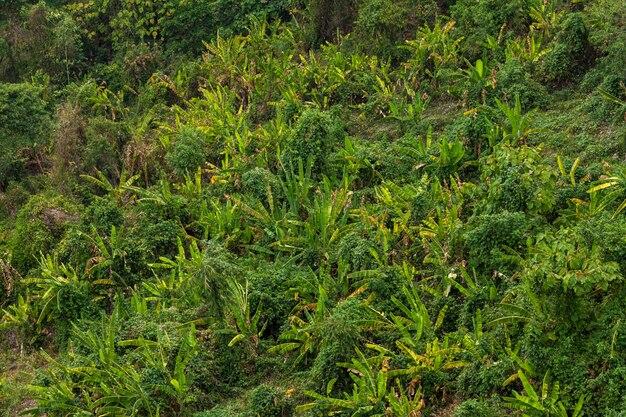Folha verde escuro da natureza da vista superior do jardim da banana.