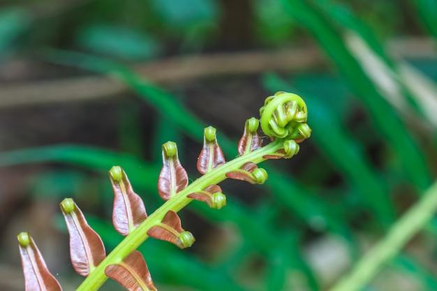 Folha verde espiral