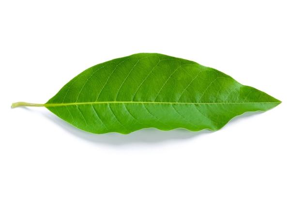 Folha verde isolada.