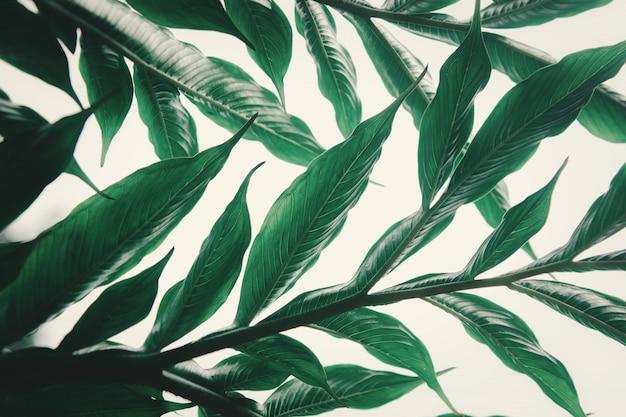 Folha verde na folha de superfície do fundo na floresta.