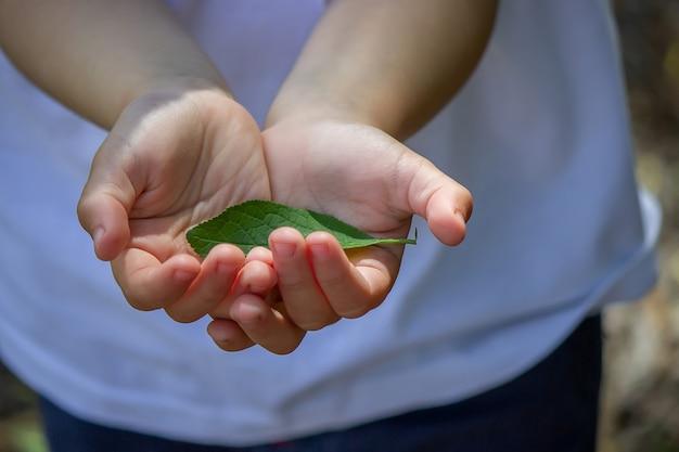 Folha verde nas mãos de um reyenka. natureza. foco seletivo.