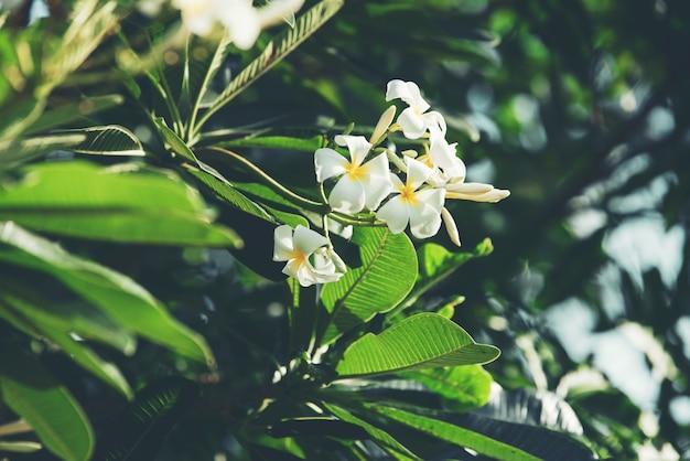 Folha verde natureza abstrata