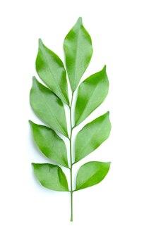 Folha verde no fundo branco