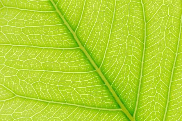 Folha verde, padrão, textura, fundo