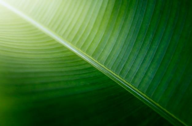Folha verde perto do fundo