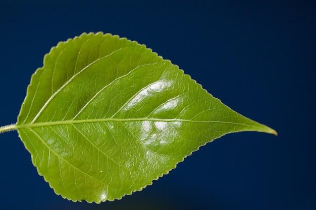 Folha verde sobre fundo azul escuro